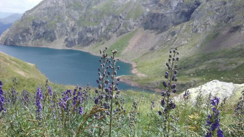 Pyreneeën 4