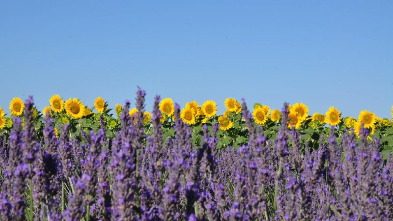 Haute Provence 12