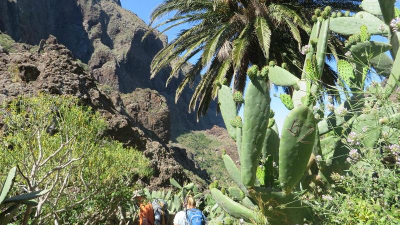 La Gomera & Tenerife 7