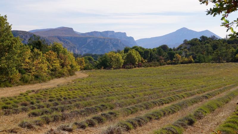 Lopus Wandelreizen Haute Provence 10